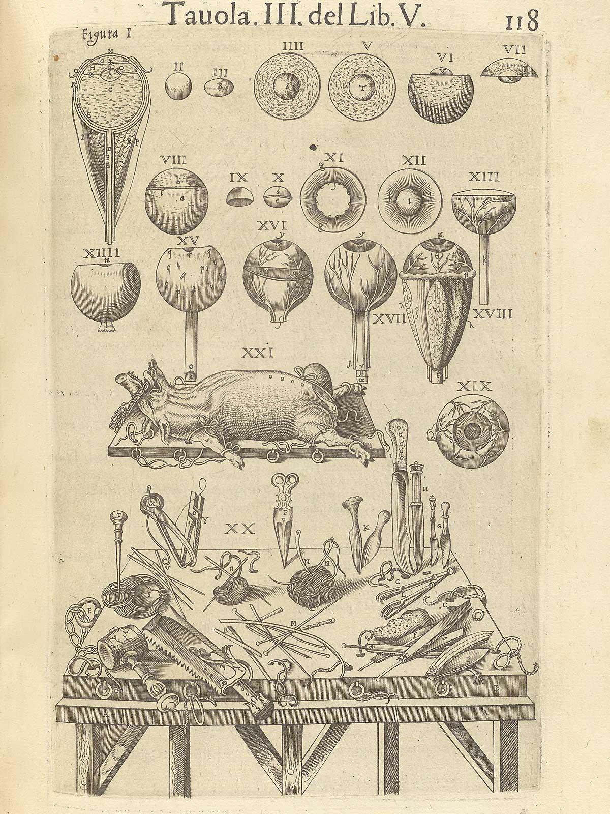 """Valverde de Amusco. """"Anatomia del corpo humano"""". Anatomy of the Human Body. p118"""