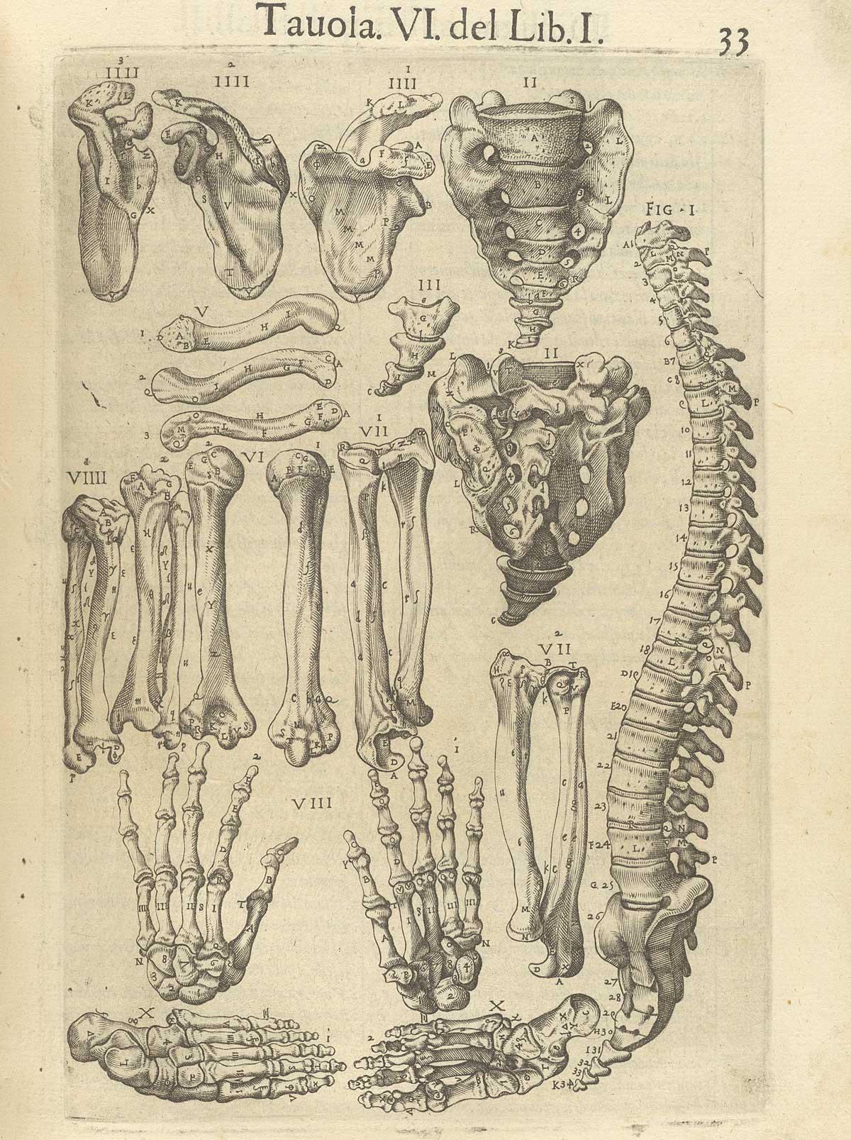 """Valverde de Amusco. """"Anatomia del corpo humano"""". Anatomy of the Human Body. p033"""