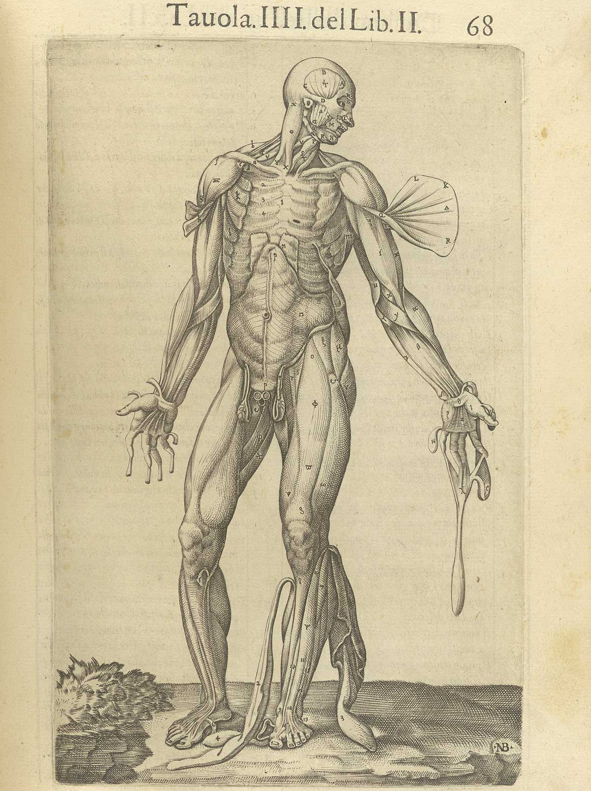 "Valverde de Amusco. ""Anatomia del corpo humano"". Anatomy of the Human Body. p068"