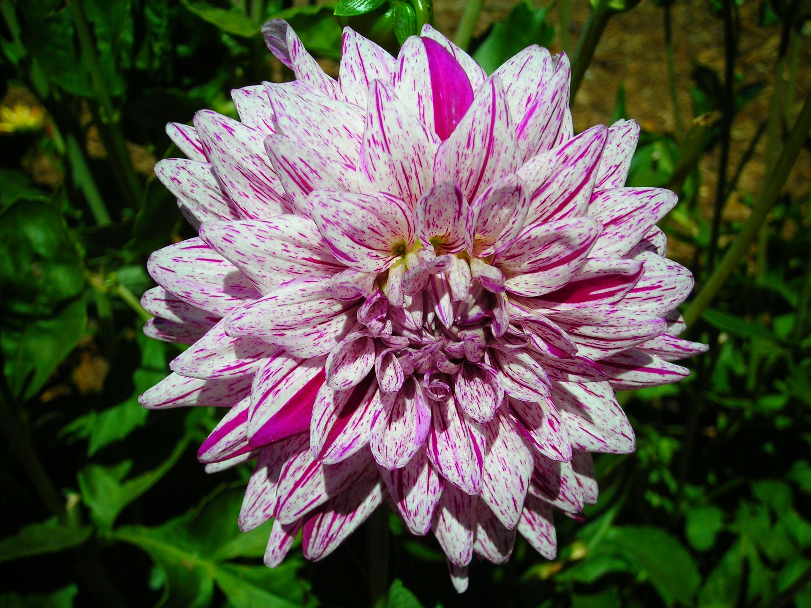 download Plant Sciences. Ha Qu