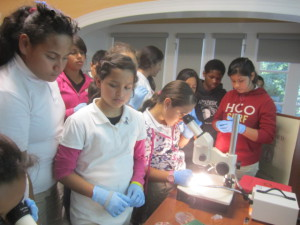 Science in the laboratory: East Palo Alto students conducting observations of embryos under the microscope.