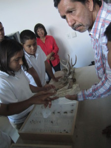 Students examining the skulls of vertebrates to make inferences about their feeding habits and role in the food chain.