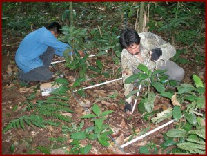 Rodolfo and field assistant measure plant characteristics in a control plot.
