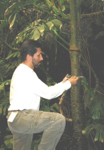 Rodolfo measuring the DBH of a tropical rainforest tree at a defaunated study site in Los Tuxtlas, Mexico.
