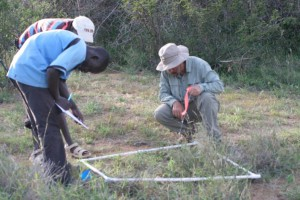 Rodolfo and field assistants sampling vegetation at control sites at Mpala Research Station, Kenya.
