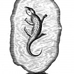 Amber-encased lizard in Kircher's museum, from Mundus Subterraneus (1665 ed.), vol. 2, p. 76