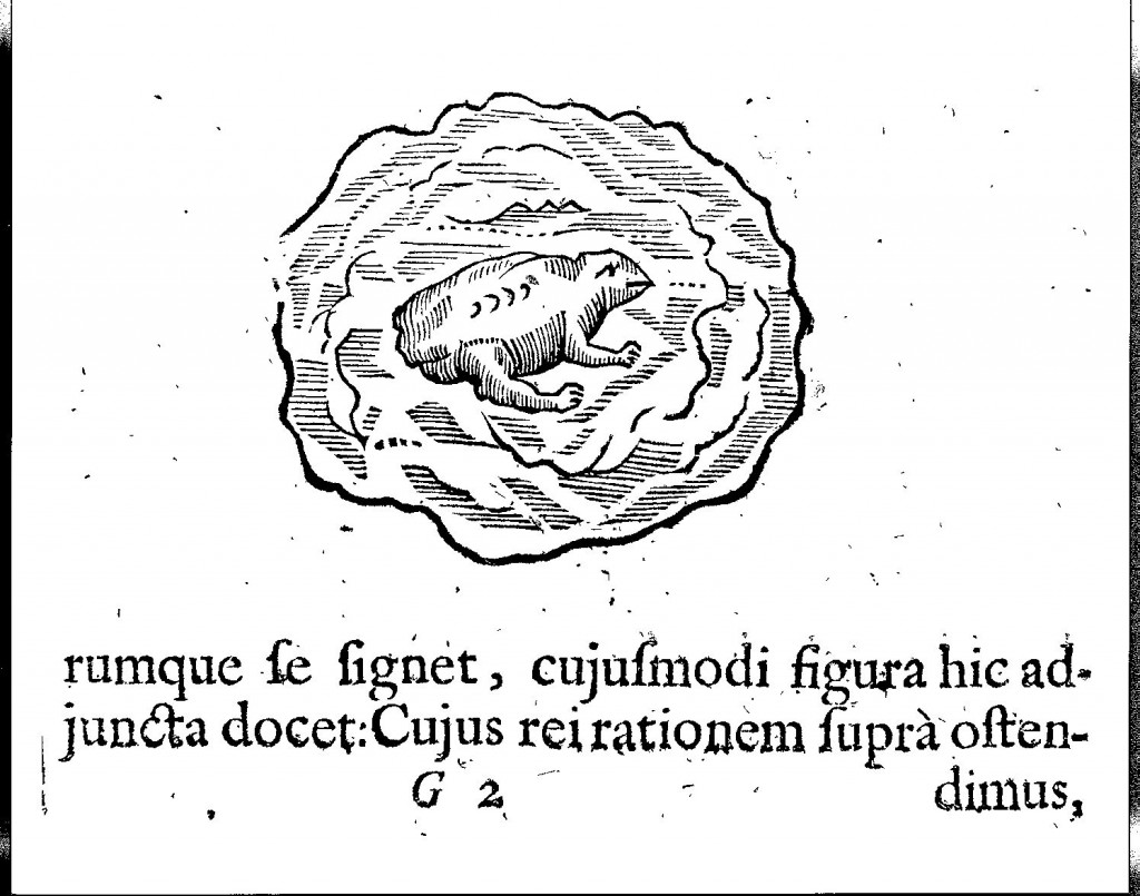 "A ""toad stone"" from Mundus Subterraneus (1665 edn.) vol. 2, p. 51."
