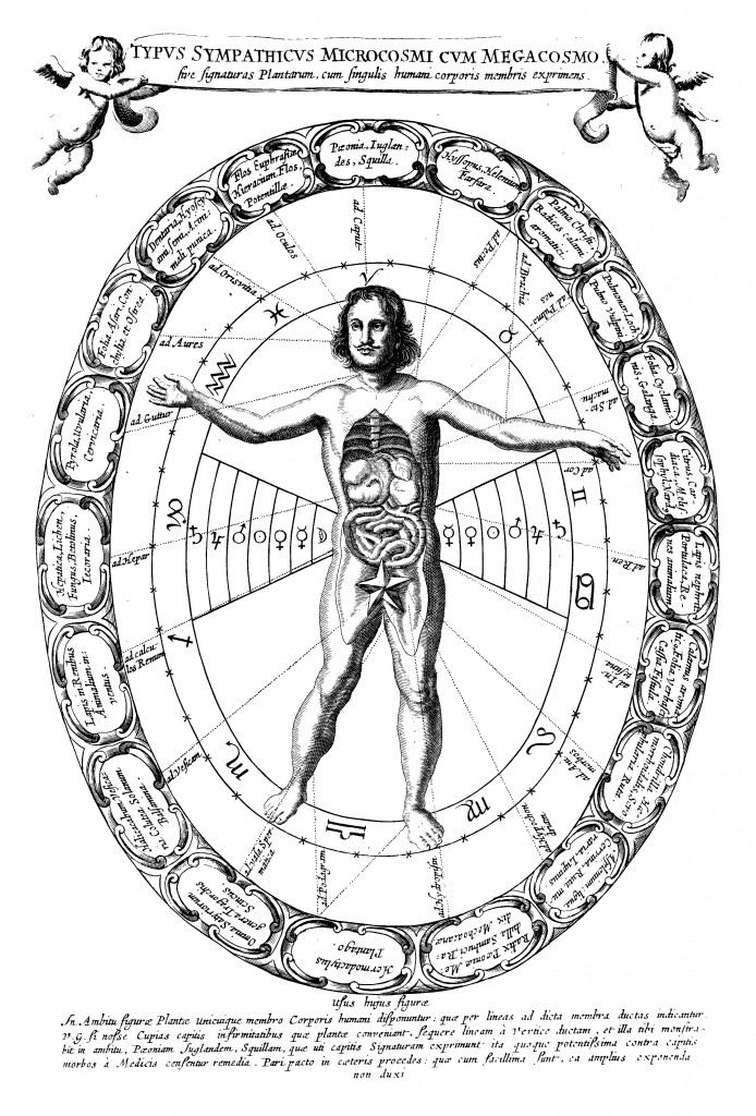 Representation of the sympathies between the microcosm and megacosm, or expressing the signatures of the plants with the members of the human body, from Mundus subterraneus (1665 edn.), vol. 2, p. 406.
