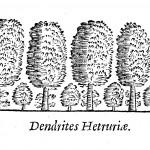 Dendrites Hetruriae.