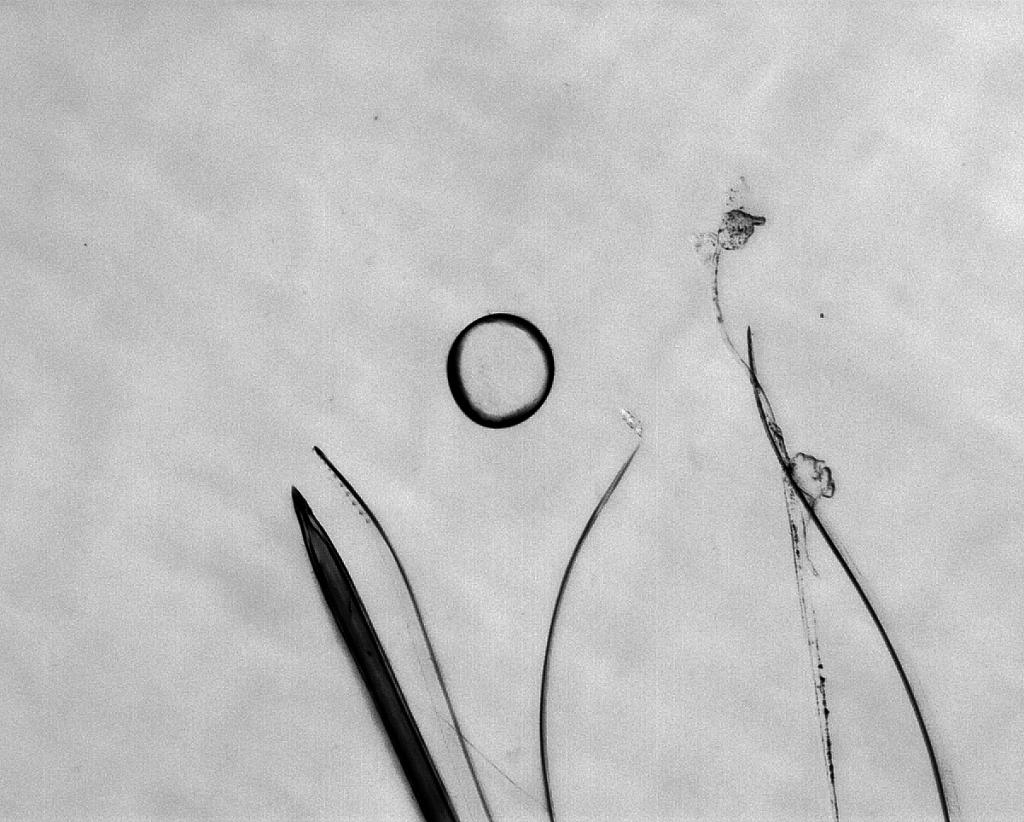 Droplet of Death by Haripriya Mukundarajan