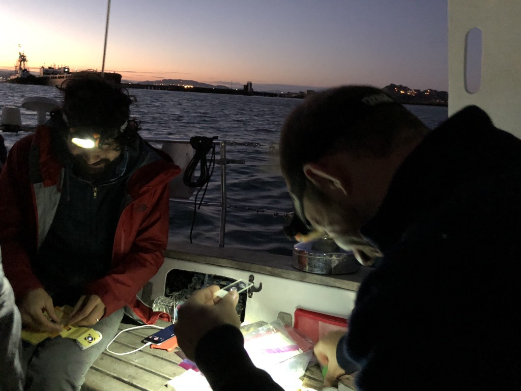 Trowling for Plankton in the San Francisco Bay