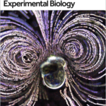 Flowtrace on cover of Journal of Experimental Biology