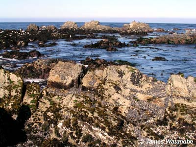 image of rocky shores