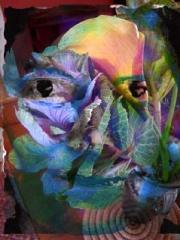 lilycabbage3-acopy