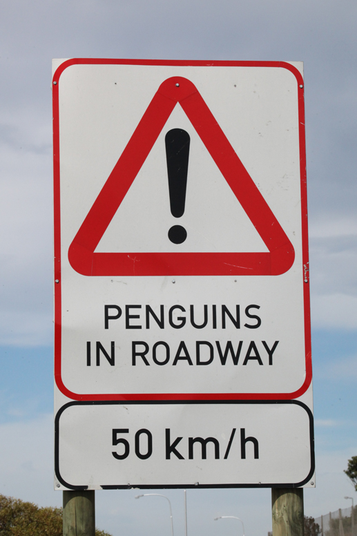 penguin crossing