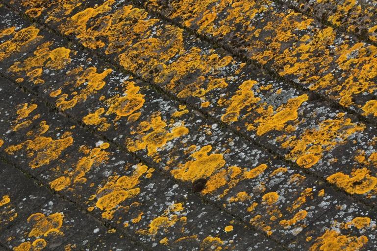 Roof Lichens