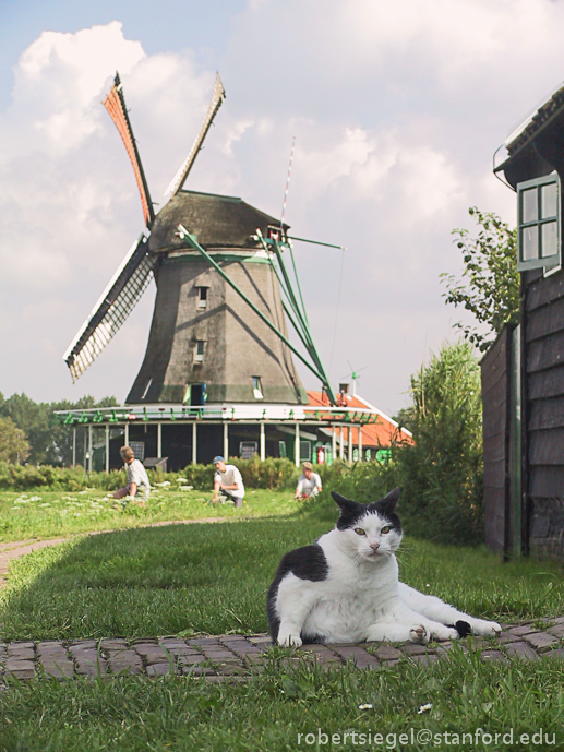 windmill guard cat