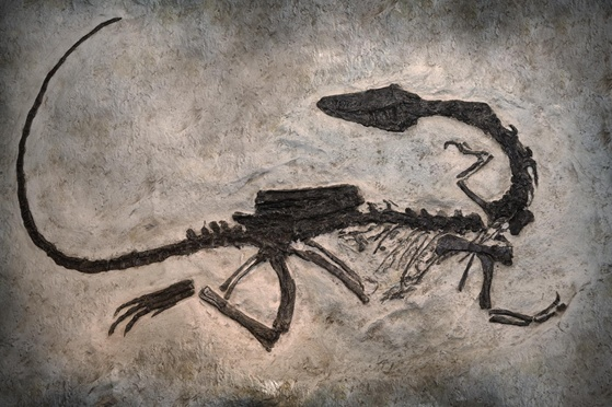 Carbon dating dinosaur fossiler