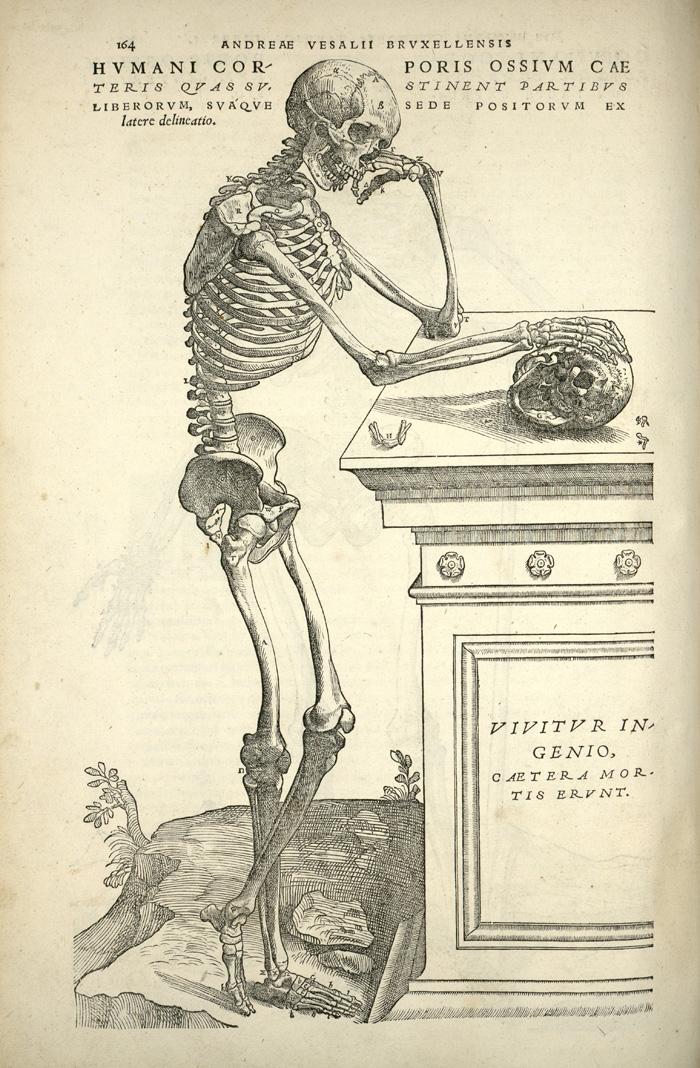 Vesalius. De humani corporis fabrica. p164