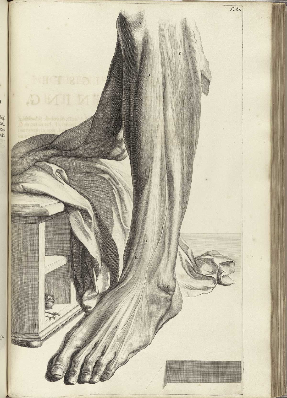"""Bidloo. """"Ontleding..."""". Anatomy of the Human Body. table 80"""