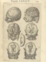 """Valverde de Amusco. """"Anatomia del corpo humano"""". Anatomy of the Human Body. p114"""
