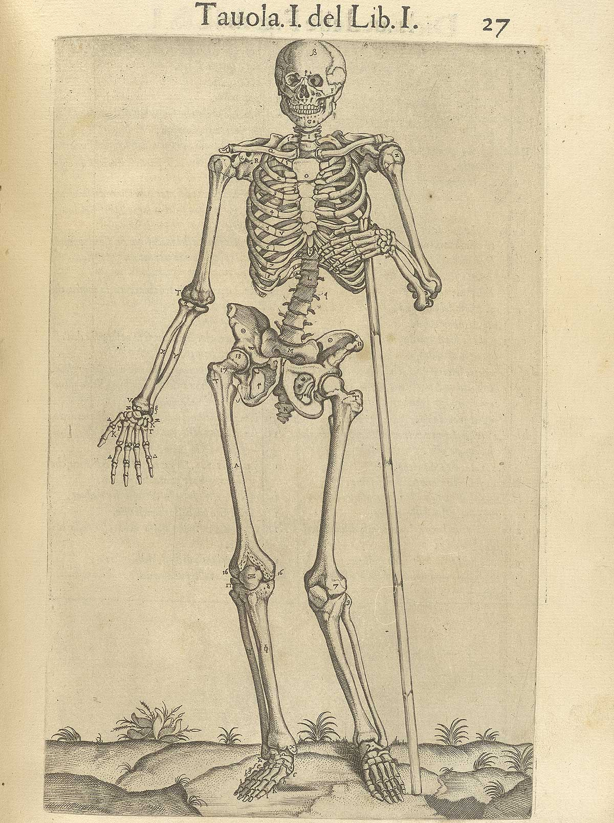 "Valverde de Amusco. ""Anatomia del corpo humano"". Anatomy of the Human Body. p027"