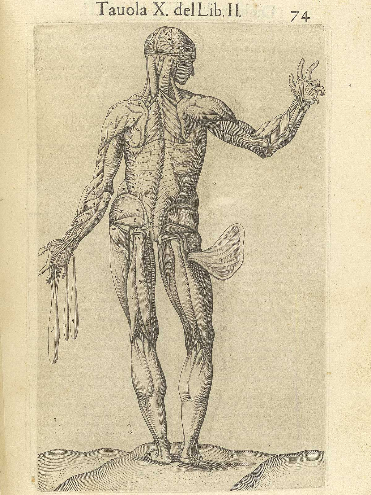 "Valverde de Amusco. ""Anatomia del corpo humano"". Anatomy of the Human Body. p074"