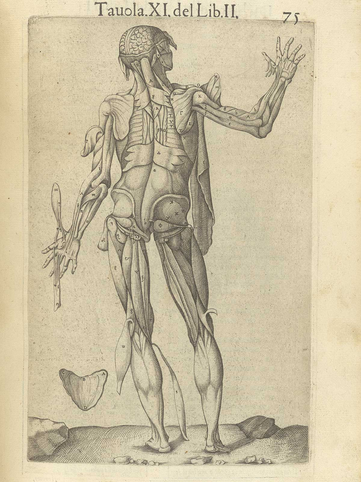 "Valverde de Amusco. ""Anatomia del corpo humano"". Anatomy of the Human Body. p075"