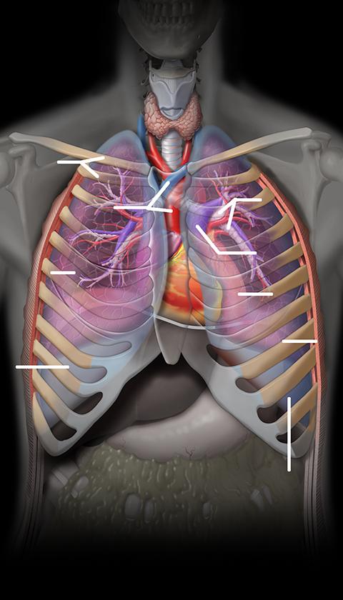 Index of /dept/radiology/radiologysite/images/Med students 1, chest