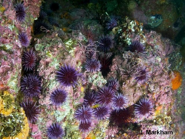 Kelp Forest Ecology