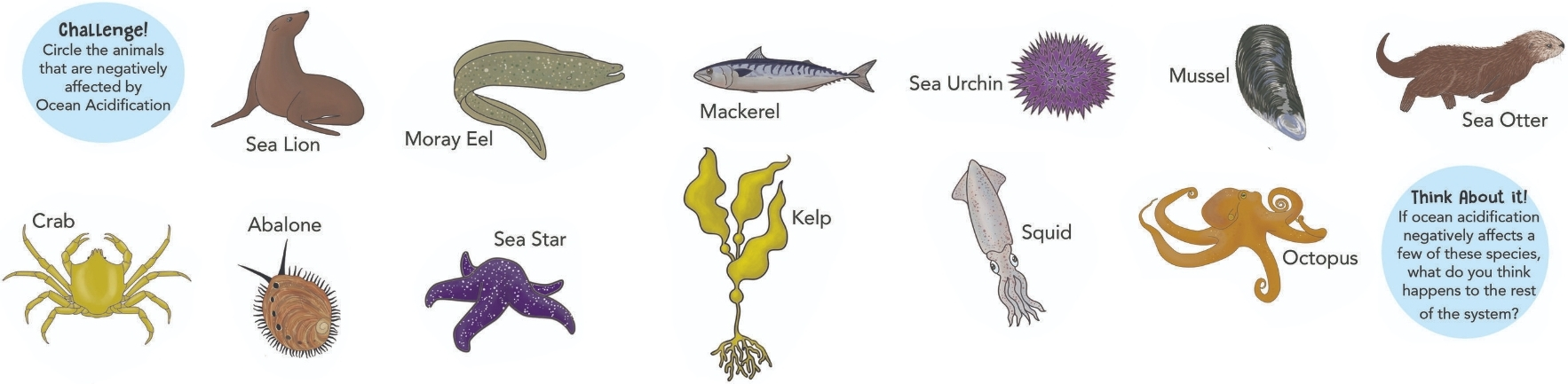 circle the animals that are negatively affected by Ocean Acidification