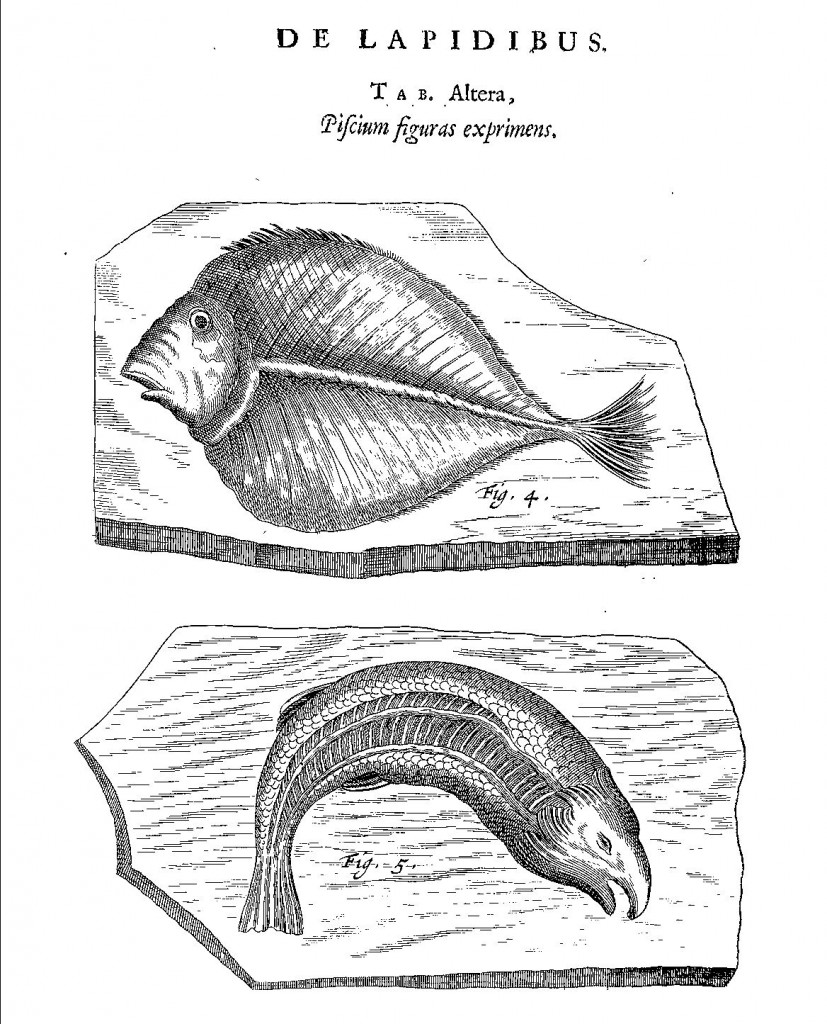 Fossils of two fish from Mundus Subterraneus (1665 edn.) vol. 2, p. 35