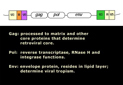 The Gag Pol And Env Proteins