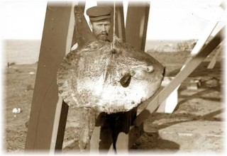 man with mola (sunfish)