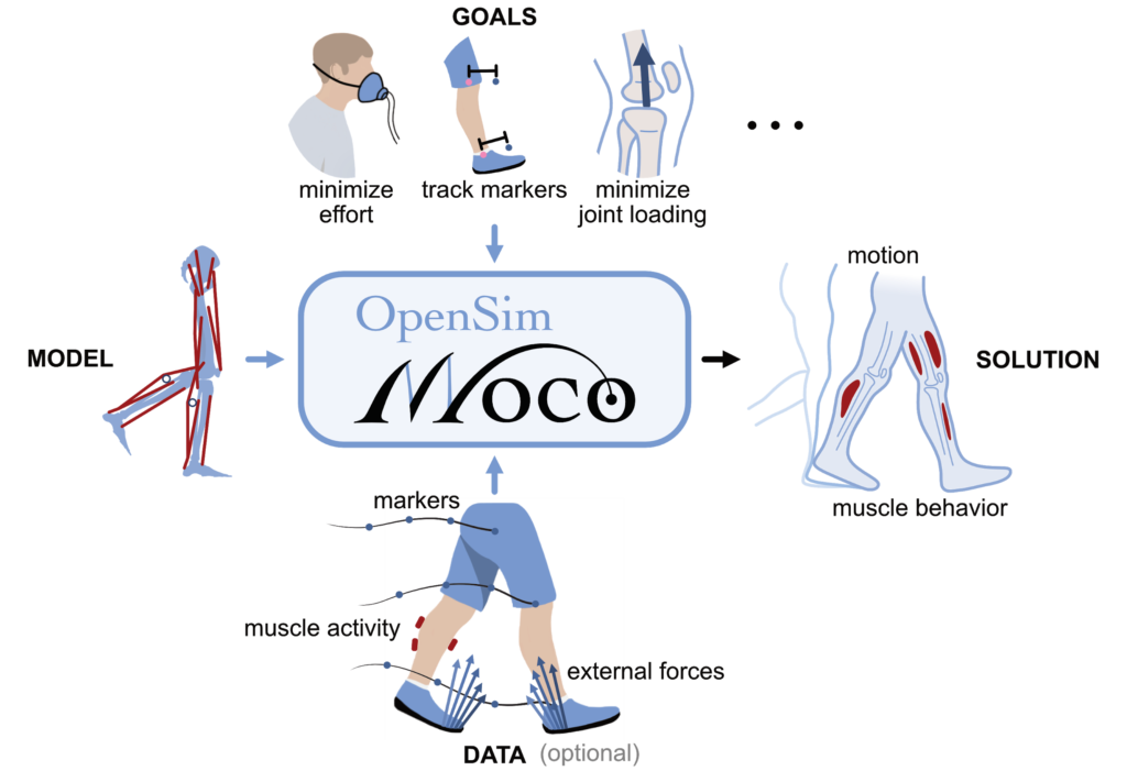 OpenSim Moco inputs and outputs