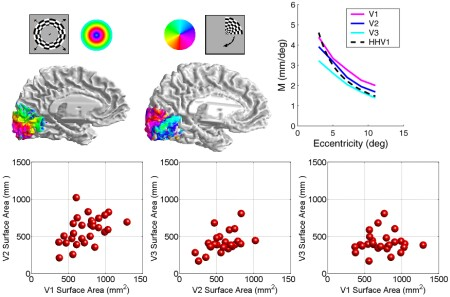 Summary figures from visual field representations paper