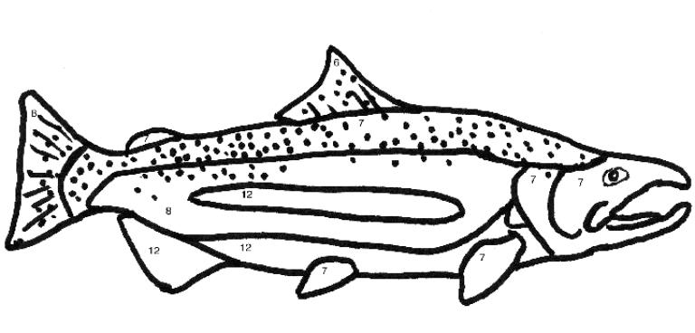 Chinook salmon coloring page coloring pages for Salmon coloring pages