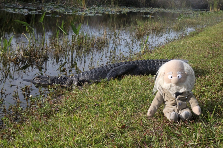 alligator and croc