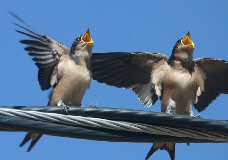 ...в архивах: птица колибри фото и фото птиц средней полосы россии.