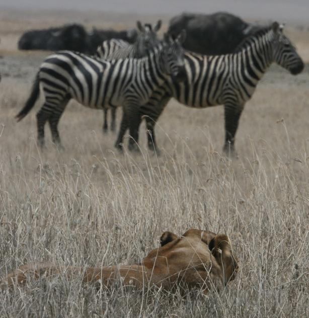 Tanzania 2006 Photo Page